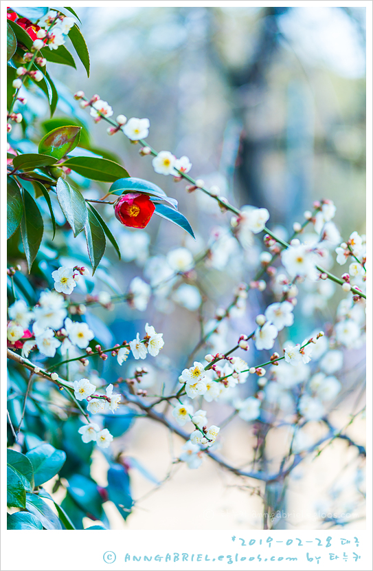 [대구] 국채보상공원 봄풍경