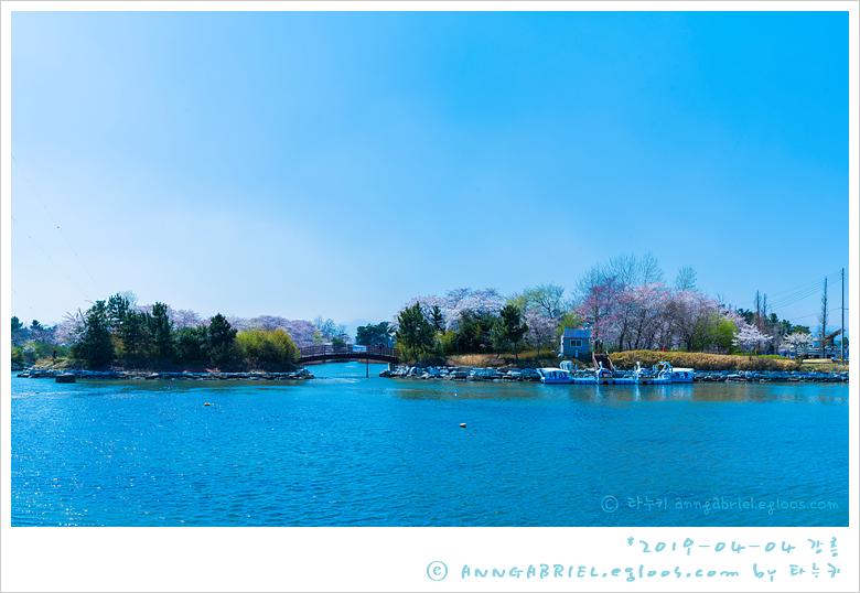 [강릉] 벚꽃 만개한 경포대 호수공원 - 1