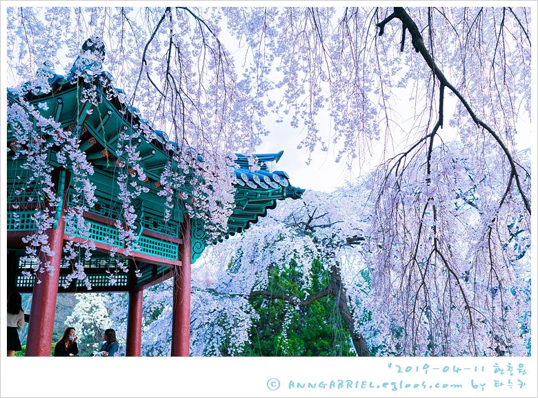 [국립서울현충원] 만개한 벚꽃 구경 - 4