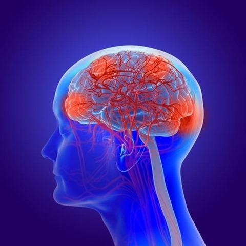 폴리페놀에 알츠하이머 예방효과, 쥐 실험으로 확인