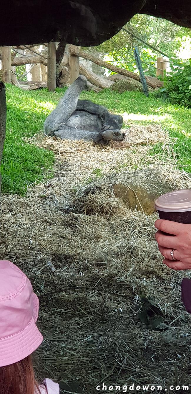 시드니 타롱가동물원, Taronga Zoo, Sydney