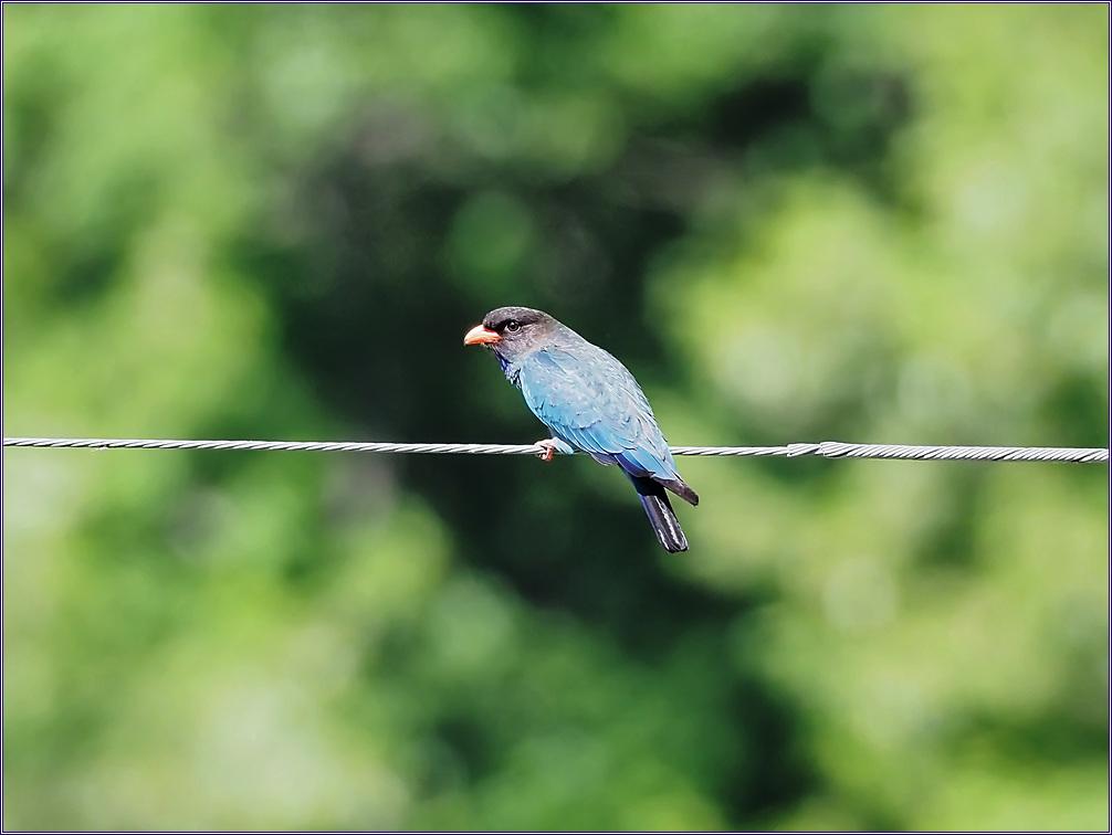 행복의 새 파랑새를 만나다.