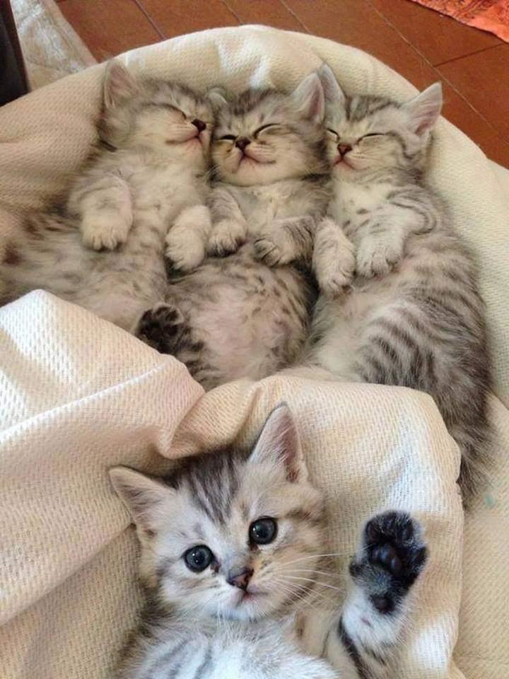 고양이가 인사하는 짤!!!